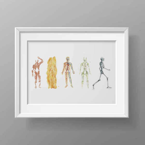 The Five Body Systems Print