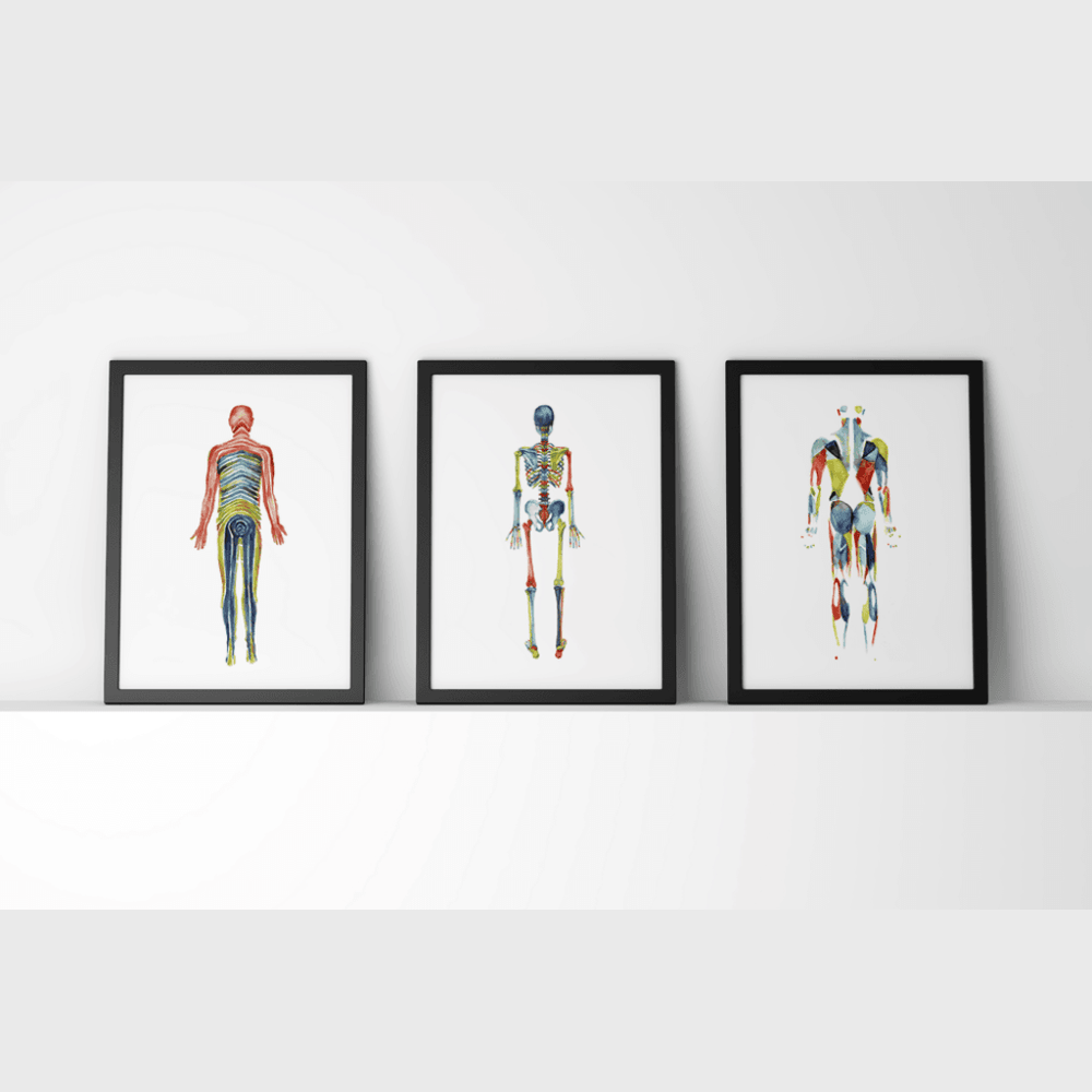 Body Systems Set in Red, Blue and Green
