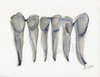 Blue Gray Incisors Watercolor - Original