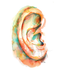 Ear Watercolor Print
