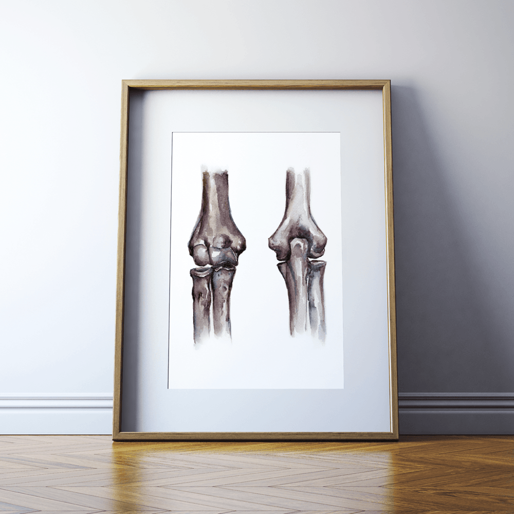 Elbow Joint Anatomy Print