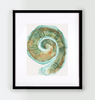 Cochlea Watercolor - Original