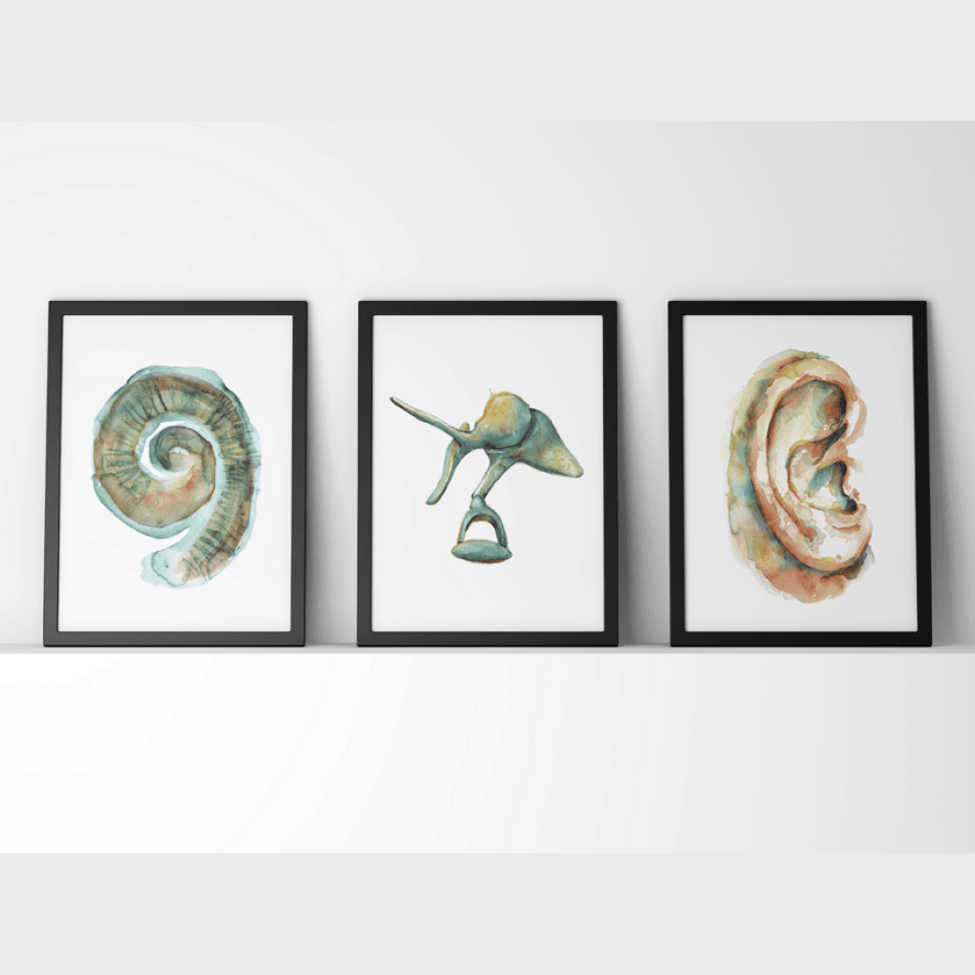 Ear Anatomy Print Set