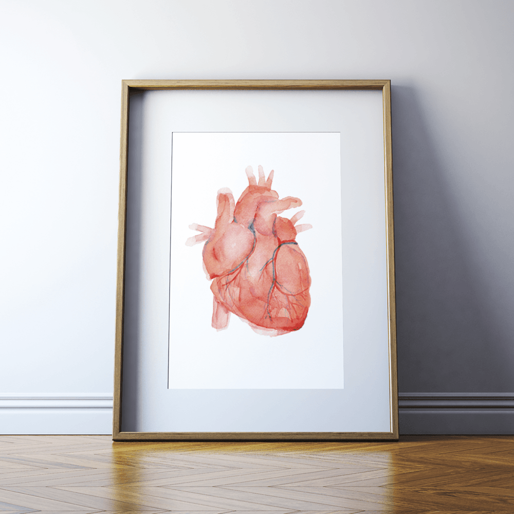 Anatomical Watercolor Print in a Wooden Frame