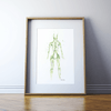 Lymphatic System Print
