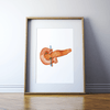 Anatomical Pancreas Print