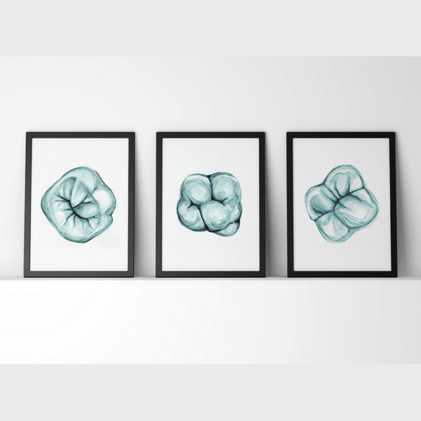 Molar in Aqua Print Set
