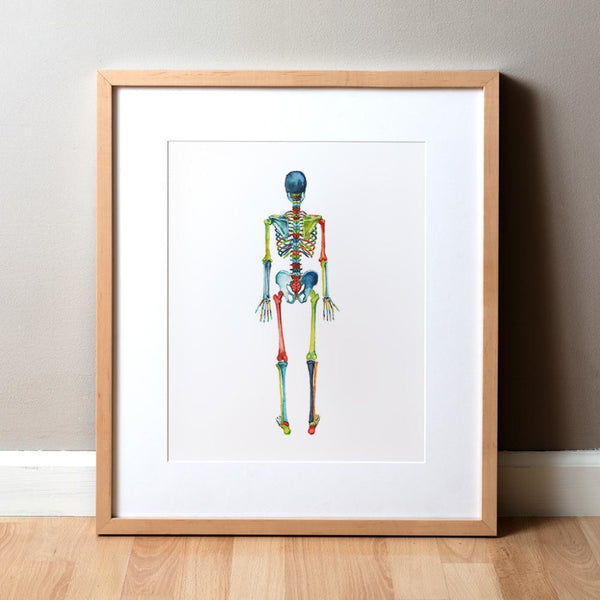 Skeletal System in Red, Green and Blue Print