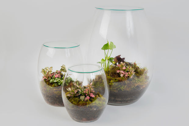 Forest Life Tropical Terrarium
