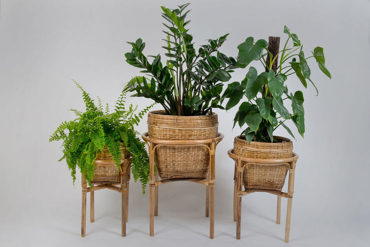Cane Plant Stand and Baskets