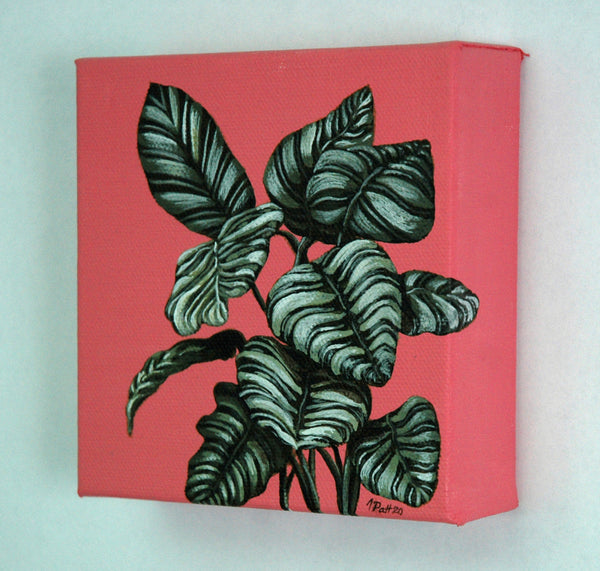 Calatheas Mini Painting