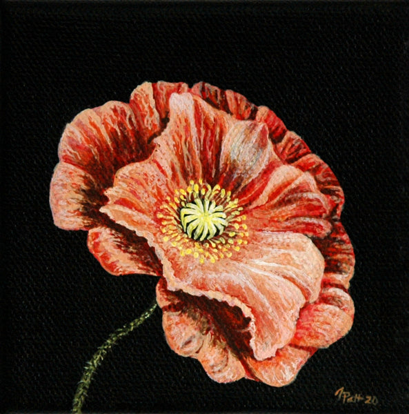 Peach Poppy Mini Painting