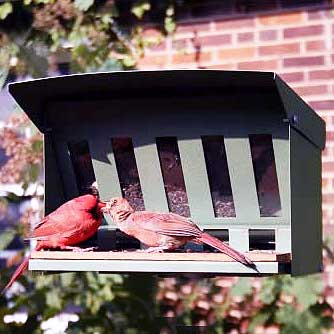 Two Birds Feasting At Squirrel Proof Double Feeder