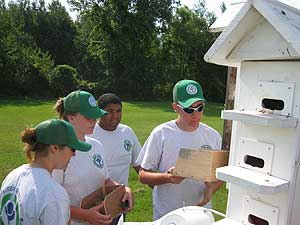 Citizen Scientists Tending To A Purple Martin Box