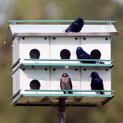 Aluminum House With Purple Martins