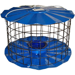 Bluebird Feeder In Blue Color