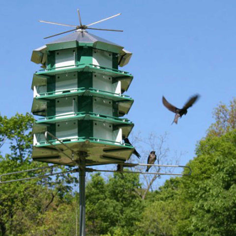 Purple Martin House With Birds Flying