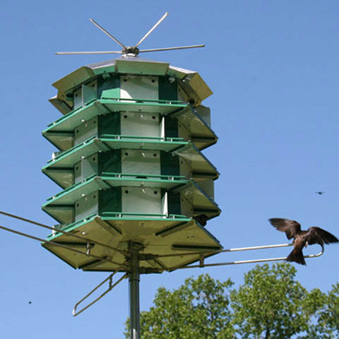 Purple Martin House With Birds Sitting