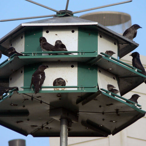 Purple Martin Mini Castle From Below