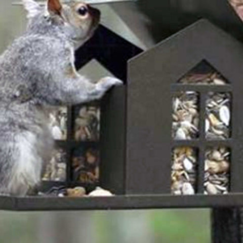Squirrel Eating Peanuts Out Of Feeder