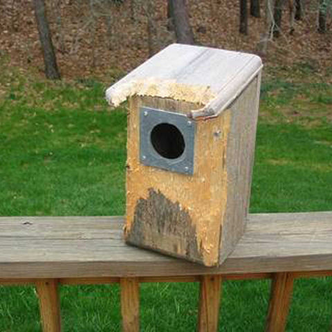 Bird House Where Squirrels Tried To Chew Past Predator Guard