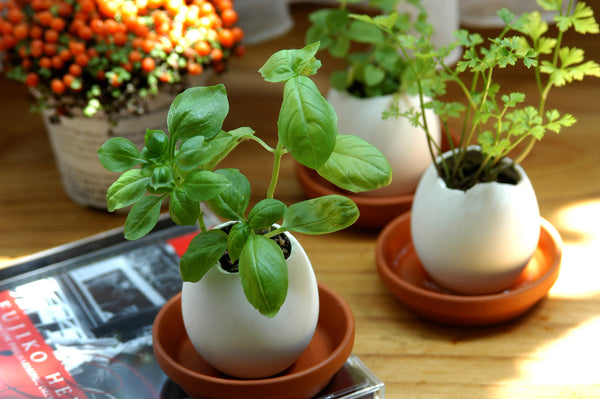 Eggling Crack & Grow - Basil - Work Home Play