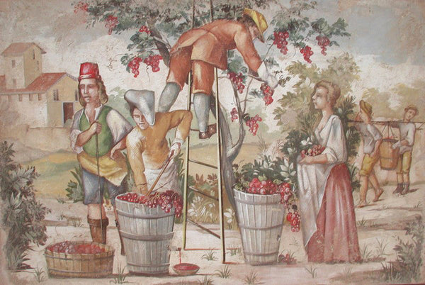 Wine Harvest Fresco