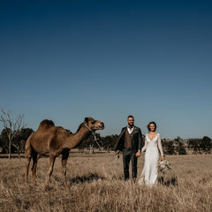 bride and groom and camel in a paddock at summer land camel farm with exotic soirees marquees