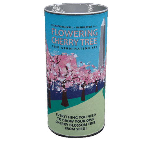 The Jonsteen Company - Flowering Cherry Grow Kit - Capitol Design