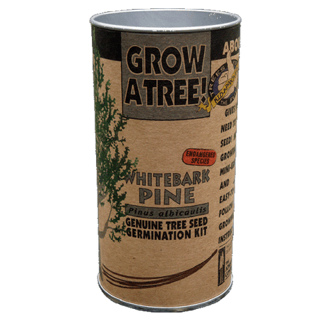 The Jonsteen Company - Whitebark Pine Grow Kit
