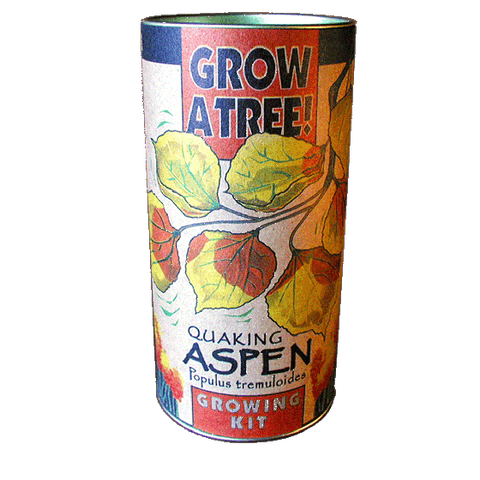 The Jonsteen Company - Quaking Aspen Grow Kit