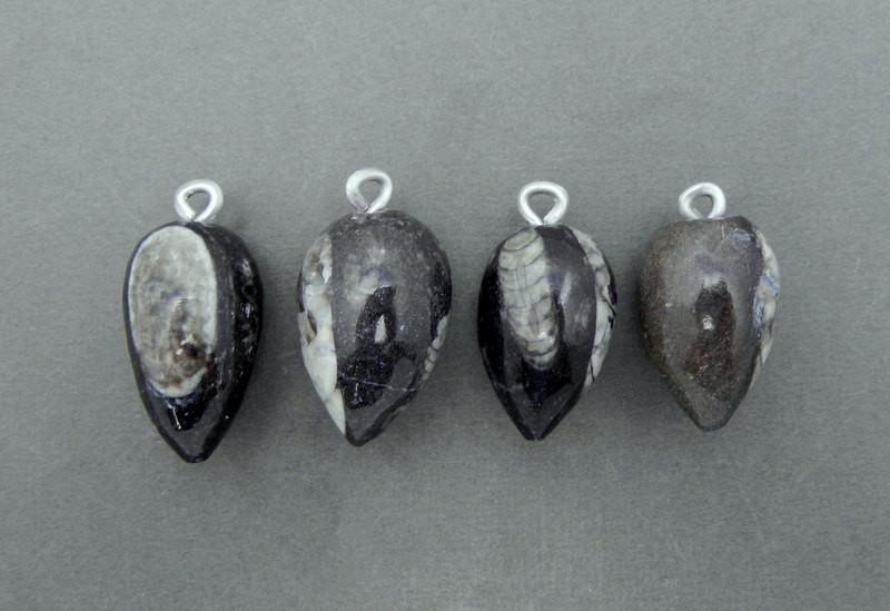 Orthoceras - Orthoceras Teardrop Fossil Drop Pendant With Silver Tone Bail (RK4B11-04)