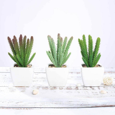 How to Throw a Cactus & Succulent Theme Party Without Breaking the Banks