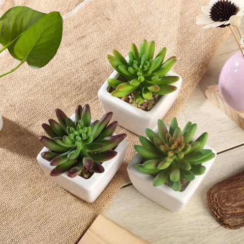 Presenting our new line of artificial succulent plants