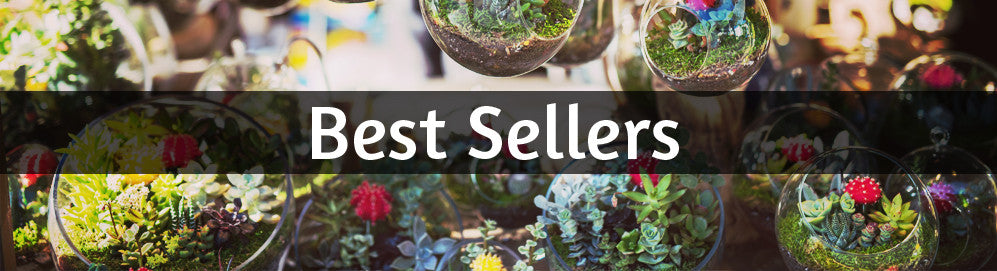 collections best-sellers