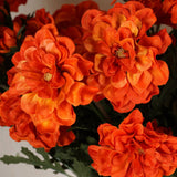 72 California Zinnia Flowers - Orange