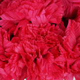 36 GIANT Your-Special-Day Carnations - Fushia