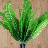 4 LARGE Boston Fern Bushes - Green