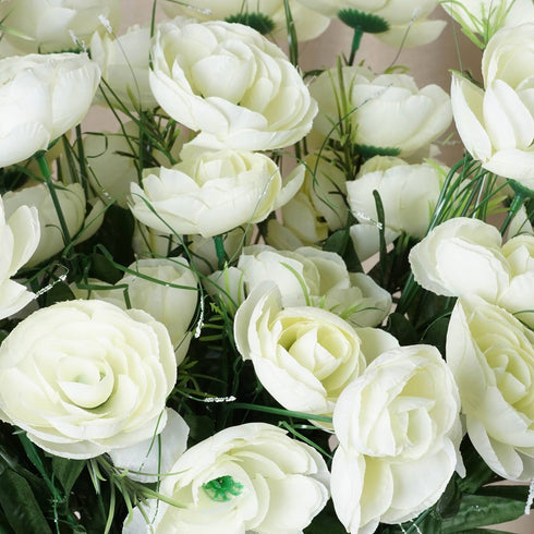 72 Buttercup Ranunculus Bulb Flowers Cream