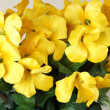 72 Primrose Flowers - Yellow