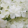 4 Pack Cream Hydrangea Flower Wall Mat Panel