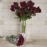 48 Long Stem Rose Bundles - Burgundy
