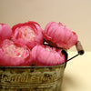 10 Pack | 3inch Silk Peony Flower Heads, Artificial Peonies For Flower Arrangement - Fushia