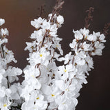 3 x Delphinium Bush - White