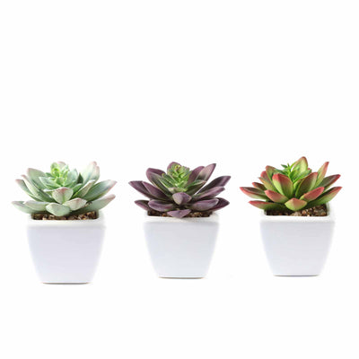 Set of 3 | 4'' Assorted Echeveria Artificial Faux Mini Succulent Air Plants in Ceramic Pot with Decorative Rocks