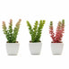 Assorted Fake Succulents in Pot | 8'' Assorted Sedum Oaxacanum Artificial Plants with Pots