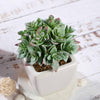 Set of 3 | Assorted Fake Succulents in Pot | 4'' Assorted Green Echeveria Artificial Plants with Pots