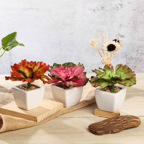 new style 67be2 f02e3 Set of 3   6   Assorted Echeveria Artificial Faux Succulent Air Plants in  Ceramic