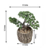 "8"" Tall - Burro's Tail Artificial Plant - Faux Succulent in Round Concrete Planter"