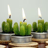 Aguacolla Cactus Succulent Tea Light Candles | 6 PCS | Gift Wrapped with Clear PVC Box & Thank You Tag